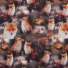 Úplet 22089 líšky, š.150