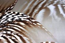 Satén animal, hnědo-bílý perutýn, š.150
