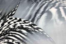 Satén animal, černo-bílý perutýn, š.150
